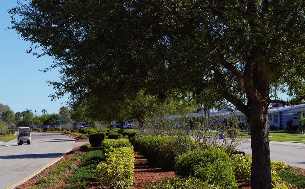 Project Aims to Enhance SCC Curb Appeal