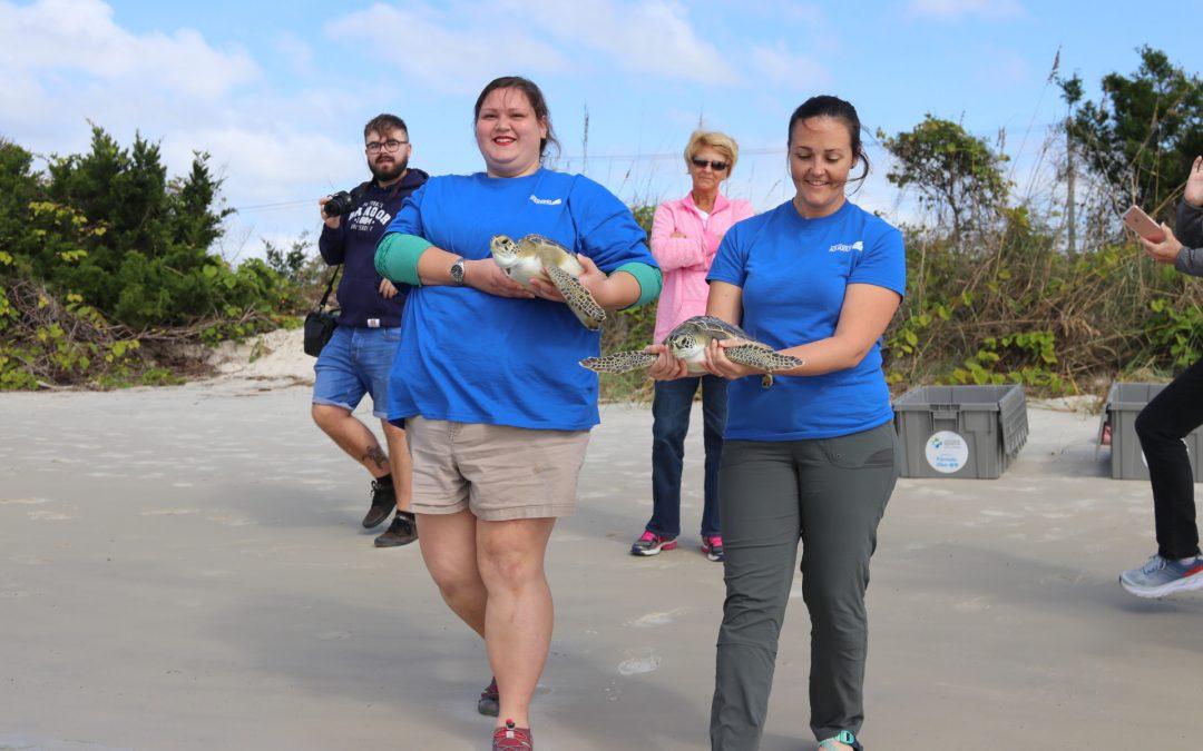 The Florida Aquarium Releases Sea Turtles